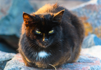 Wild Feral Black Cat at the Seaside