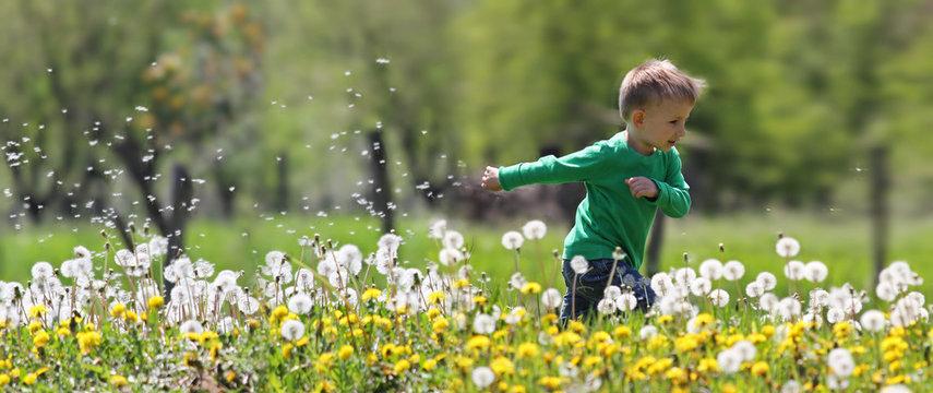Little kid running in dandelions
