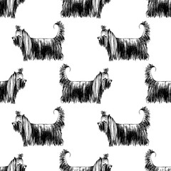 Seamless pattern with hand drawn Yorkshire Terriers
