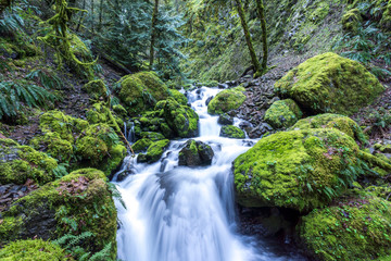 Cascading Waterfalls and stream, moss covered rocks. Iconic Oregon image, Pacific Northwest