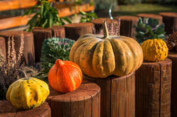 Decorative pumpkins in autumn garden