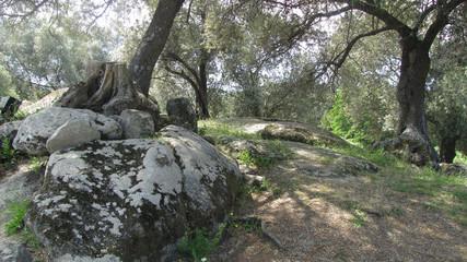 Corsica. Old landscape of Filitosa