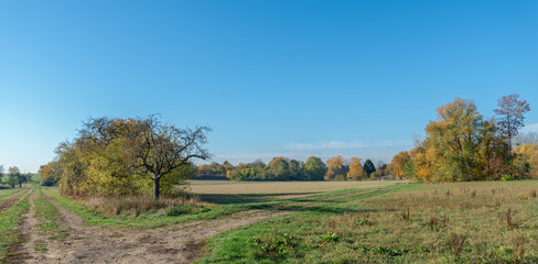 Color outdoor autumnal nature image of a rural countryside with fall foliage,trees,meadow,grass and a path fork on a bright clear sunny day, one way leading to the horizon