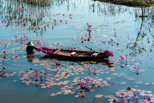 Yen river with rowing boat harvesting waterlily in Ninh Binh, Vietnam