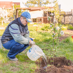 A young man pours a freshly planted apple seedling from a bucket. Text in Russian: for mixing, carrying, storing, repairing.
