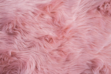 Pink sheepskin background. Fur pattern. Wool texture. Sheep fur close up Wall mural