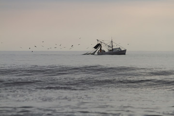 shrimp boat being followed by a flock of birds