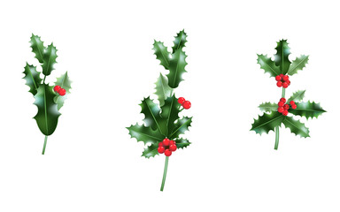 Holly branches set