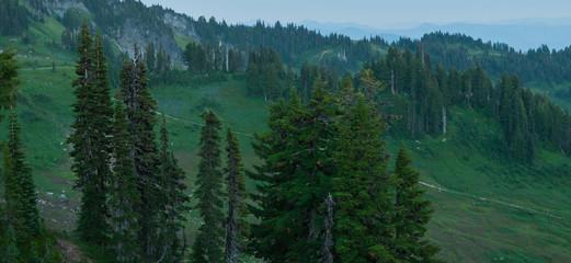 Cedar trees in Mount Rainier National Park