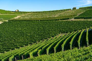 Vineyards near Barolo, Cuneo, in Langhe