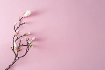 White and pink flowers on pastel pink background. Minimal flat lay top view composition.