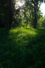 Summer park 2