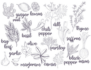 Set of various types of spices and herbs. Vector freehand illustration isolated on white background.