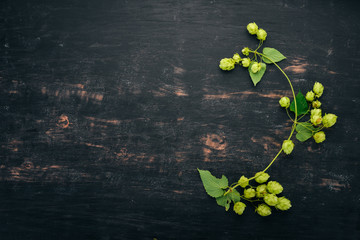 Hops. On the old wooden background. Free space for text. Top view.