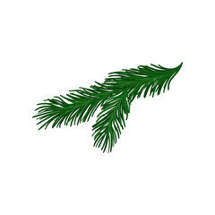 Green twig of fir tree with short spines. Christmas plant. Natural object. Flat vector for holiday poster or postcard