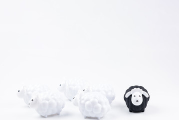 Black sheep doll and White sheep doll isolated on white background with blank for your text.