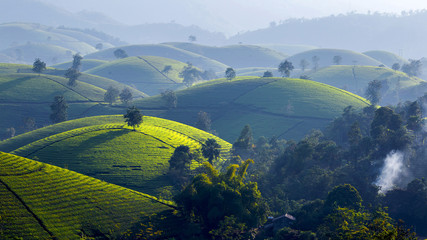 Tea hills in Long Coc highland, Phu Tho province in Vietnam Wall mural