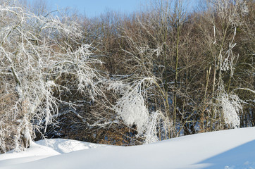 winter landscape, snow drifts and icy trees