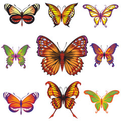 vector collection of butterflies