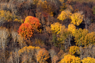 Scenic landscape of autumn forest in mountains on sunny day