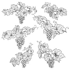 Hand Drawn Grape Branches