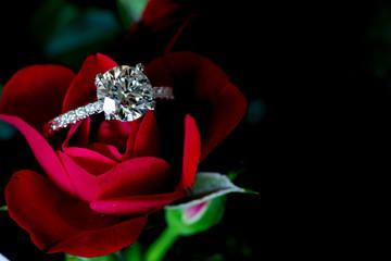 Platinum Diamond Ring On Red Rose