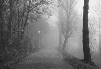 melancholic autumn in black and white