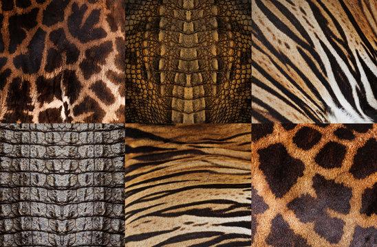 Animal skin background, Tiger, Crocodile, Giraffe