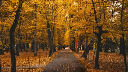 Autumn Fall Park Yellow Orange Leaves