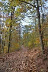Waldweg durch den leuchtend bunten Herbst