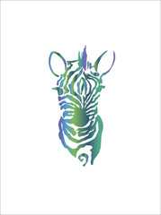Color illustration of a african zebra. Drawing by hand