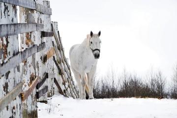 Alone horse