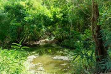 A beautiful stream flows through a thick, overgrown forest. Landscape summer forest with a stream. Outdoor recreation.