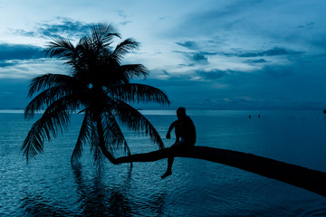 Idyllic Palm Tree at Dusk