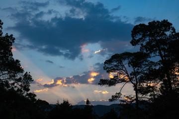 Landscape with silhouette of trees in Rancho Santa Elena, Hidalgo, Mexico