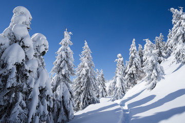 Fototapete - Winter landscape with spruce forest and trail in the snow