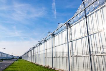 Dutch Greenhouse