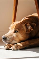 Dog Lazing at Porch
