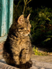The muzzle of a brown domestic cat. The cat looks up. Yellow-green blurry background with circles. Cat's face close-up. A pet in nature. Bokeh. The village, the park.