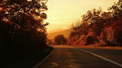The road in the countryside in autumn at sunset in gold tones