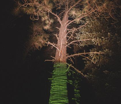 Green laser making a pattern on a tree trunk.