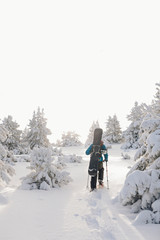 Hiker Snowshoeing with a snowboard back in a forest at sunrise