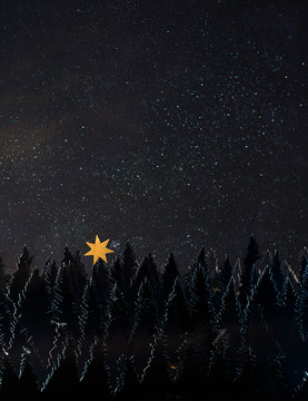 Pine tree forest by night made of paper with the starry night
