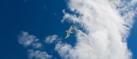 Seagull and Clouds 01