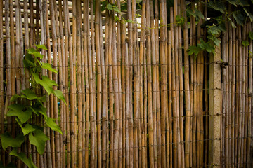 Bamboo fence with vines growing on it