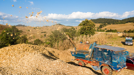 Transport of Traditional Combine Operator Harvesting Corn on the Field in Summer Evening at North of Thailand