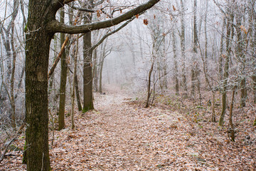 Winter forest footpath
