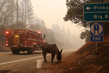 A donkey is seen tied to a road sign during the Camp Fire near Big Bend