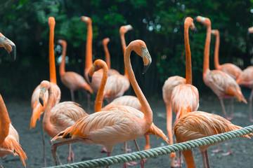 bright orange flamingo in a zoo