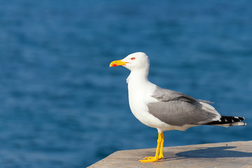 Seagull on Pier in sea
